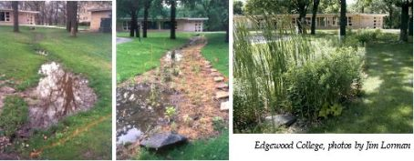 raingardens-edgewood